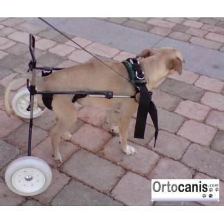 Chien fauteuil roulant