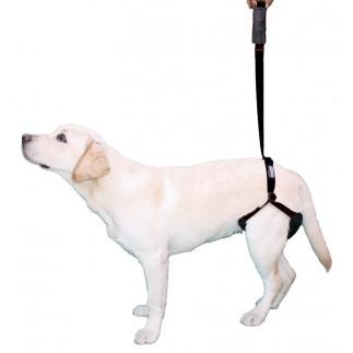 Harnais de soutien pour chien pattes arrière