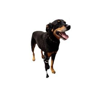 protesis para perro