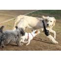 Protection du coude Bursite du chien