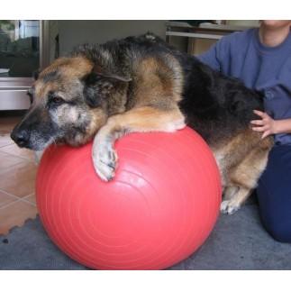 Ballon de rééducation pour chien