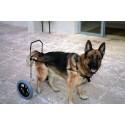 Silla de ruedas para perro a medida