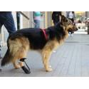 Bota para corregir knuckling en perros