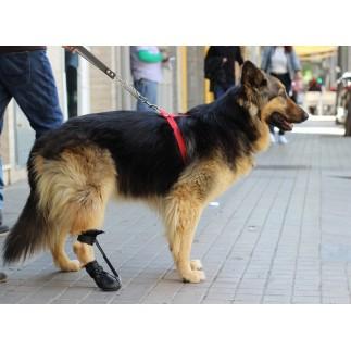 Chaussure pour corriger le knuckling chez les chiens