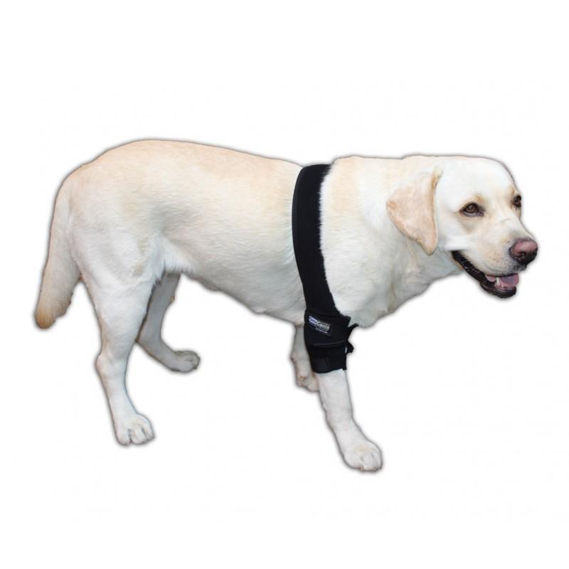 Pack Protector de codo canino