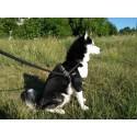Orthèse double du coude pour chien