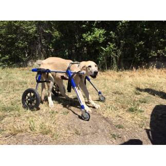 Roues avant de chariot roulant pour chien