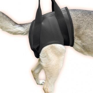 Harnais patte arrière pour chien JULIUS