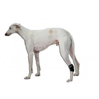 Soutien du tarse pour chien