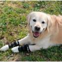 Protecteur carpe pour chien