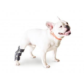 Immobilisation du tarse pour chien