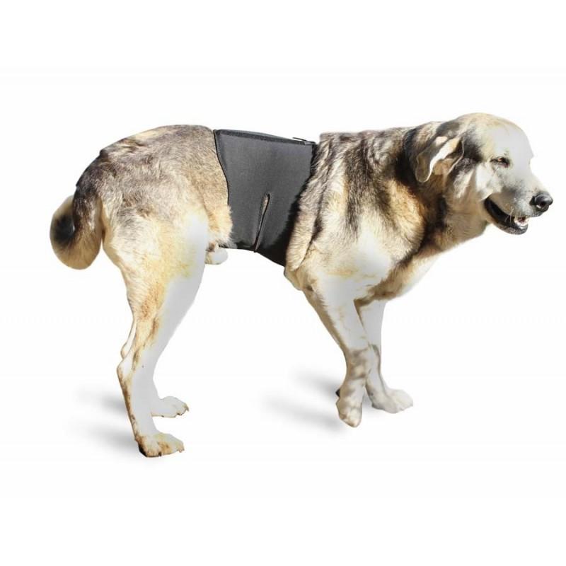 Dog support column