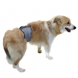 Bandeau de protection urinaire pour chiens mâles