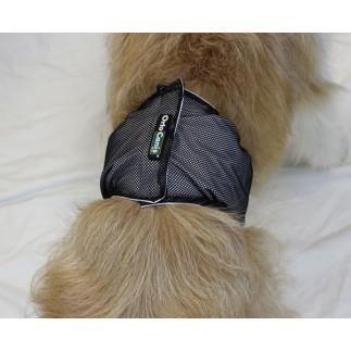 Bande de protection pour chiens incontinents