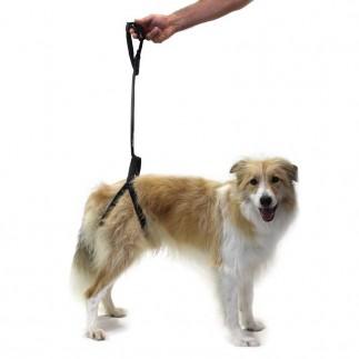 Harnais de soutien pour chien