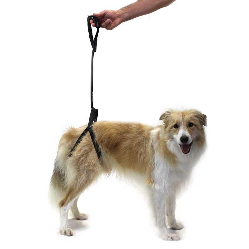 Arn s perro para soporte patas traseras for Cane zampe posteriori cedono