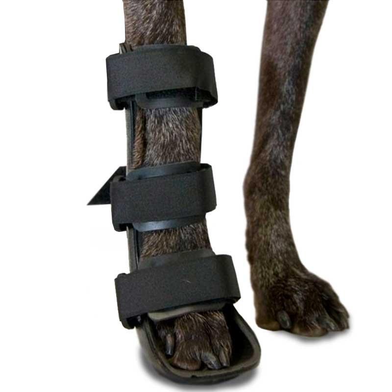 Tala ortopédica para cão. Membro anterior