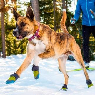 Dog winter boot