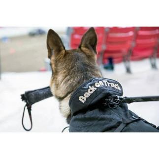 Manteau thermique pour chien