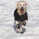 Mantella termica impermeabile per cani