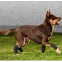 Protecteur du carpe pour chien
