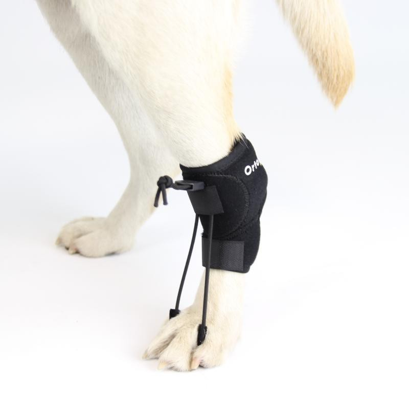 Eliminador knukling perro