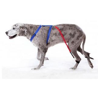 Biko Brace pour chien atteint de myélopathie dégénérative ou d'ataxie