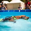 Harnais multifonction pour chien Julius K9