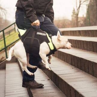 Lifting harness Dogaids