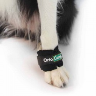 Peso para fortalecimiento muscular en perros