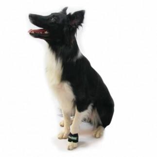Gewicht für Muskelaufbau bei Hunden