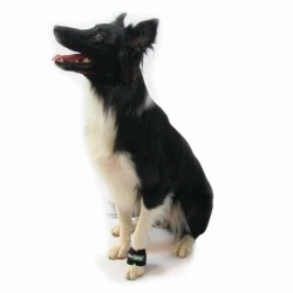 Bracelet lesté pour le renforcement musculaire du chien