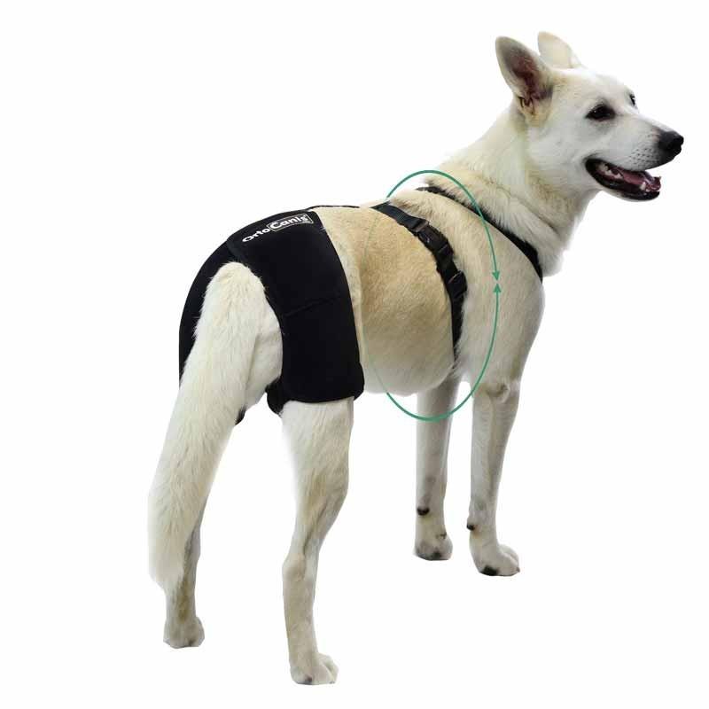 Suporte de anca canino