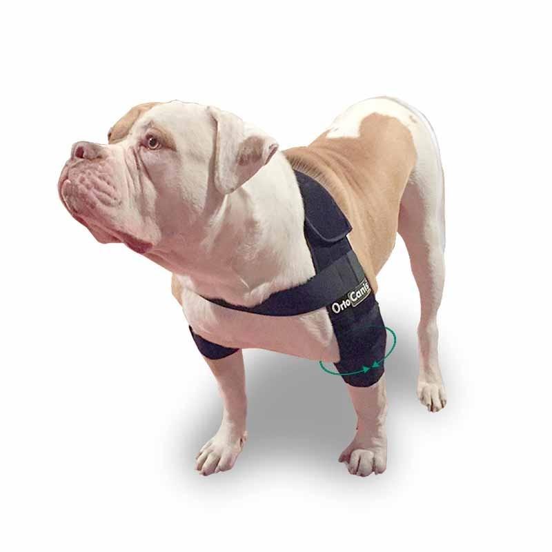 Tutore gomito per cane