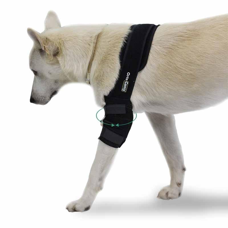 Protecteur de coude pour chien