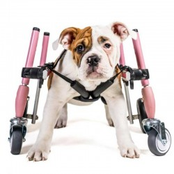 Dog accessory front wheels