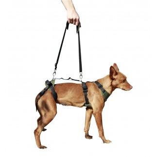 Harnais canine complète