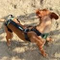 Imbracatura sostegno totale per cani