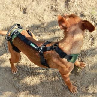 Arnés canino integral