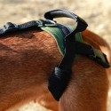 Dog integral harness