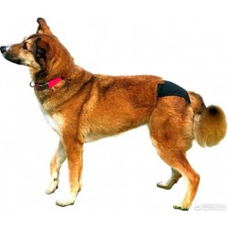 Cuecas Protectoras Caninas