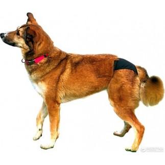 Culotte de protection pour chien incontinent ou chienne en chaleur
