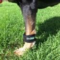 Peso potenziamento muscolare in cani