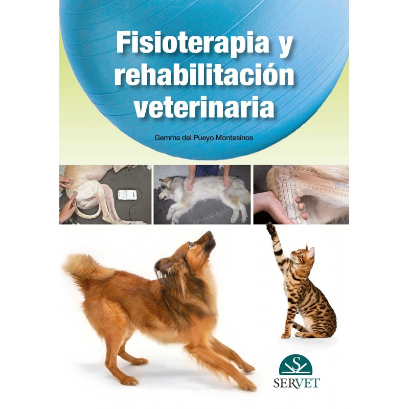 Physiotherapie und Rehabilitation Veterinär