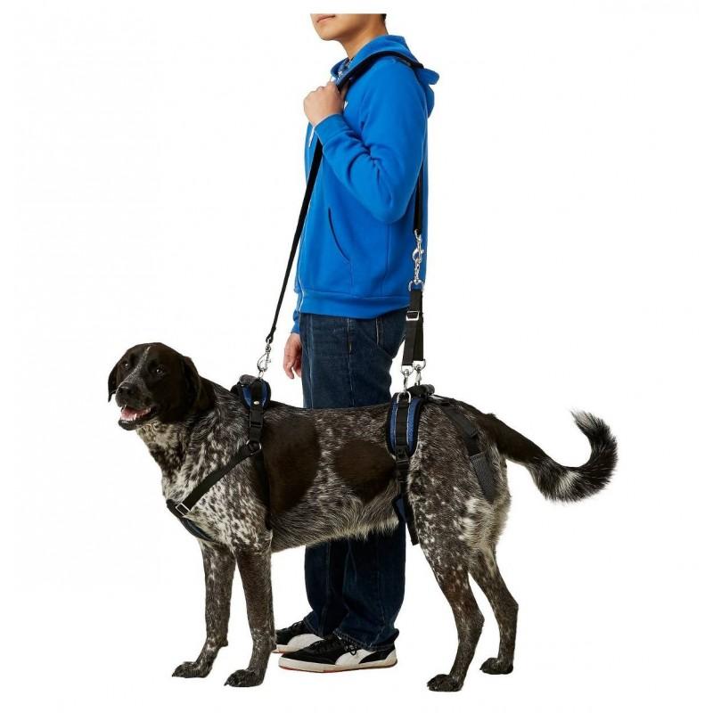 Arnés para perro con artrosis