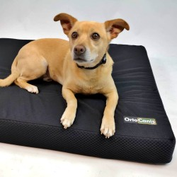 Mattress for old dogs