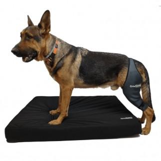 Spezialmatratze für ältere Hunde