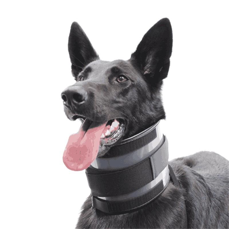 Collier anti mordillage pour chien