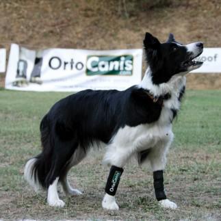Suporte elástico para carpo canino