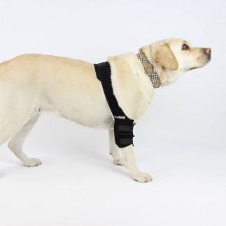 Protector de codo perro